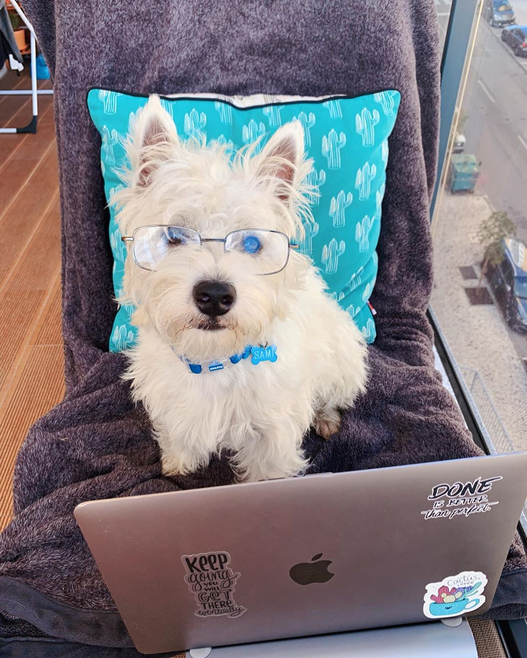 Cute westie puppy with glasses on the nose, in front of a computer