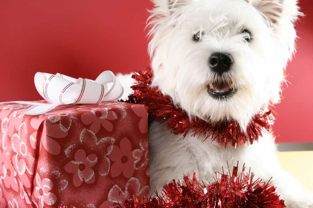 Christmas Gifts for Westie Owners